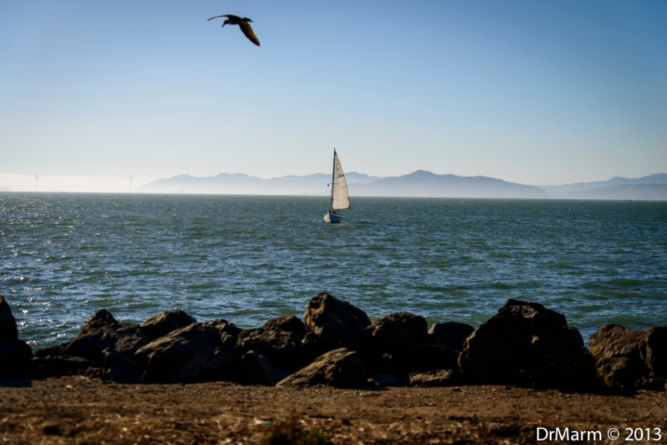 Gull and Sails