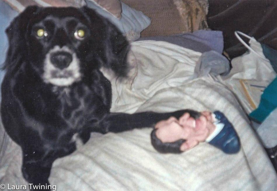 Democrat Dog