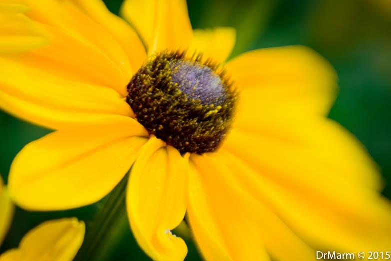 Pollen Powderpuff