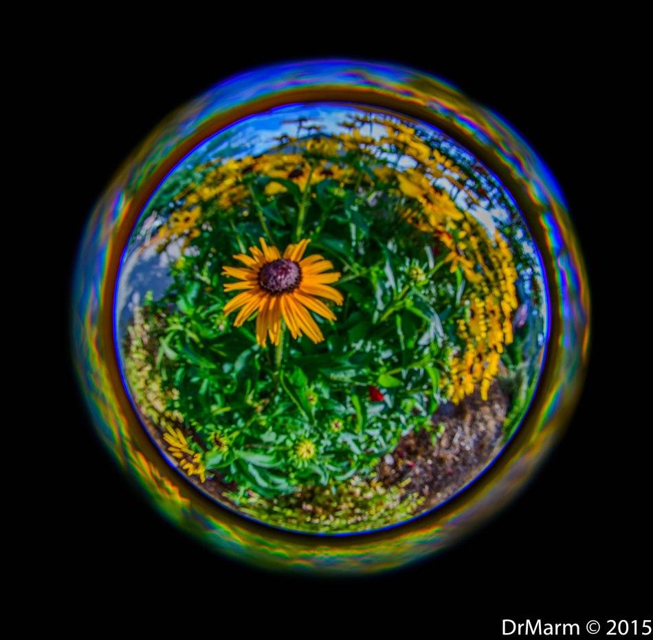 Sunshine Globe