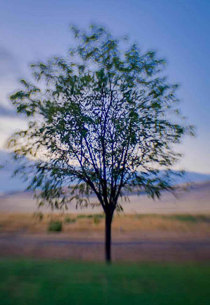Lone Tree. Day 74 jpg